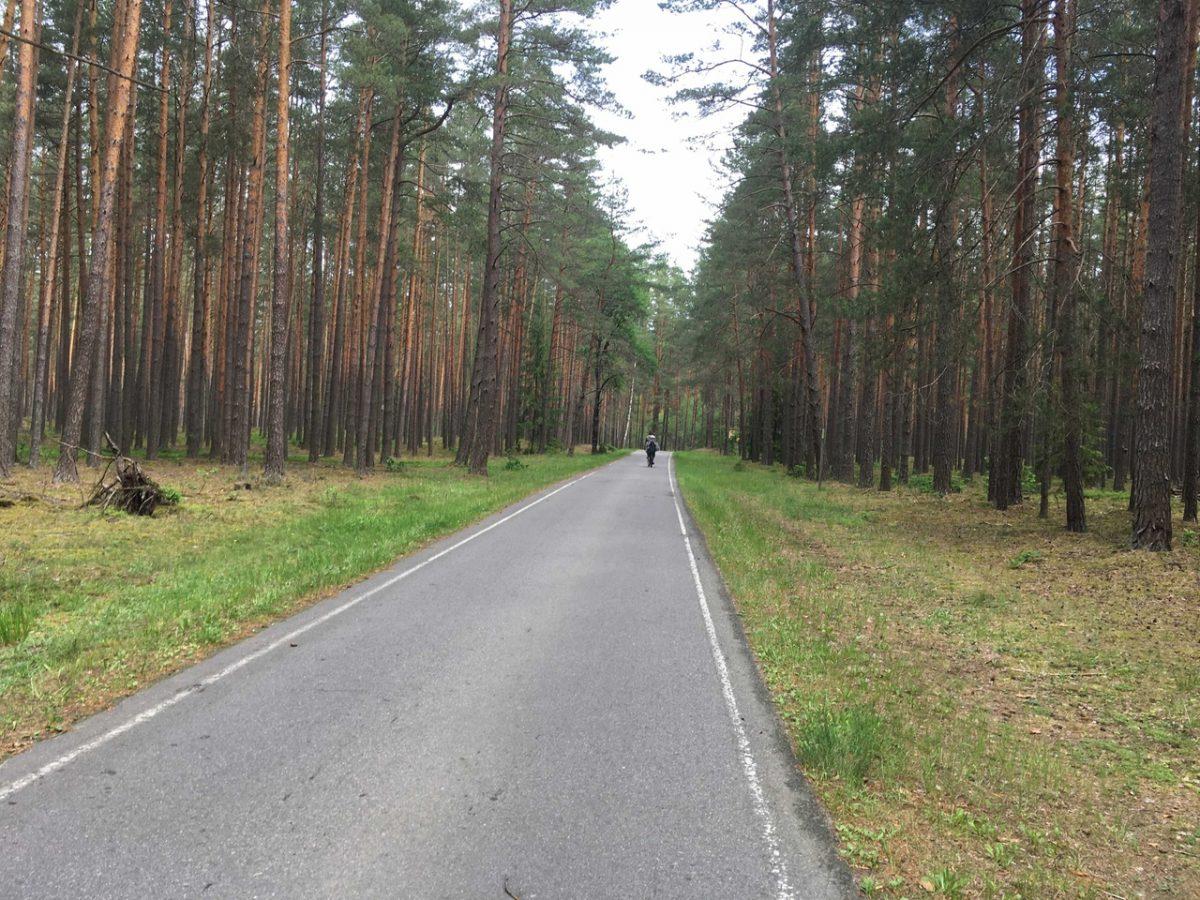 экскурсия и трансфер в Беловежскую пущу